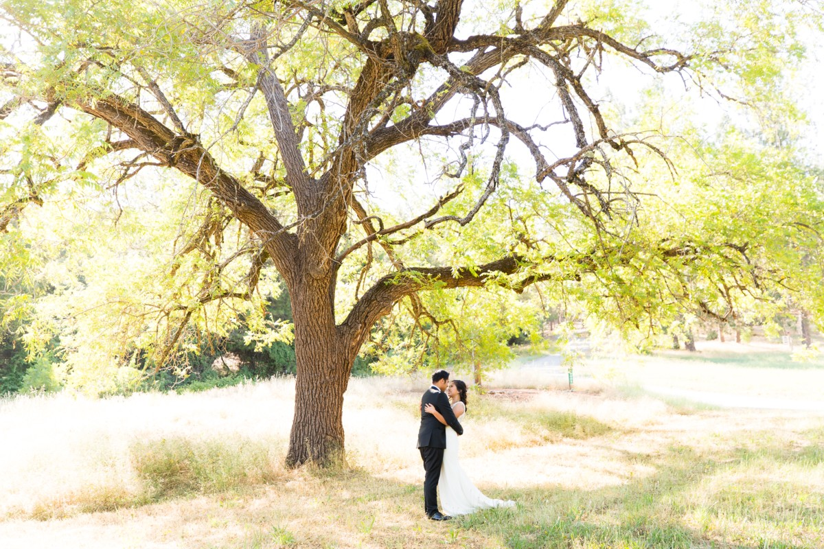 B&B Photography Lake Tahoe wedding - couple under tree