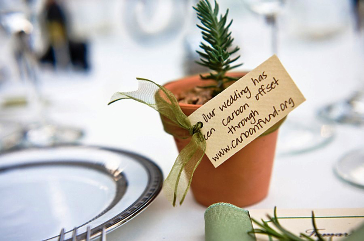 Favor green wedding potted plant