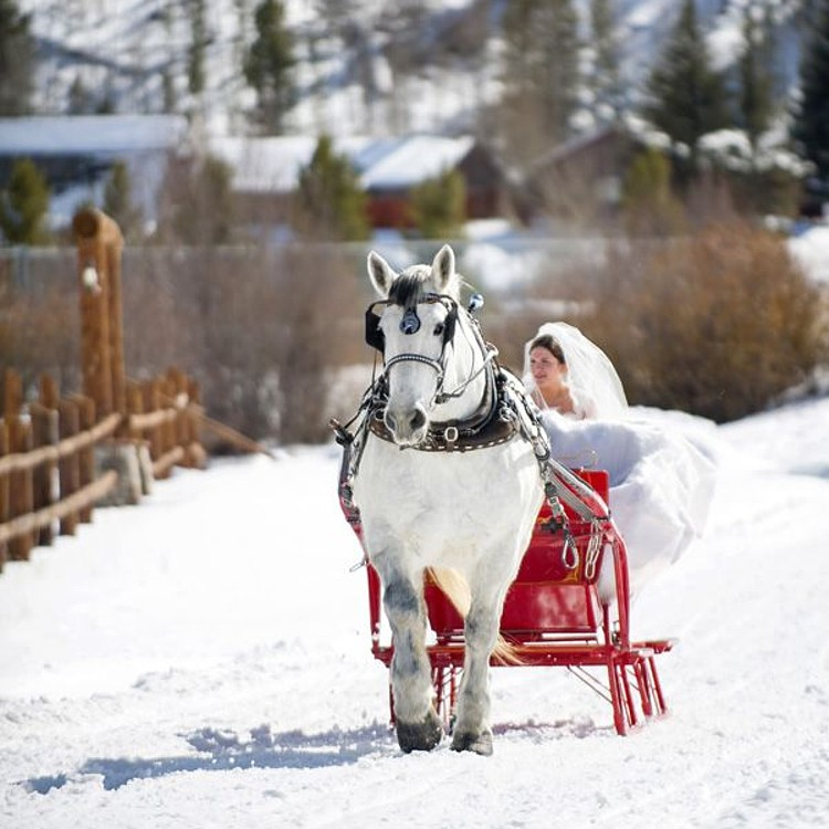 Wedding Transportation Horse and Carriage in Winter